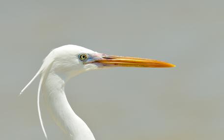 Bird aware