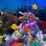 Brick Wonders - Barrier Reef